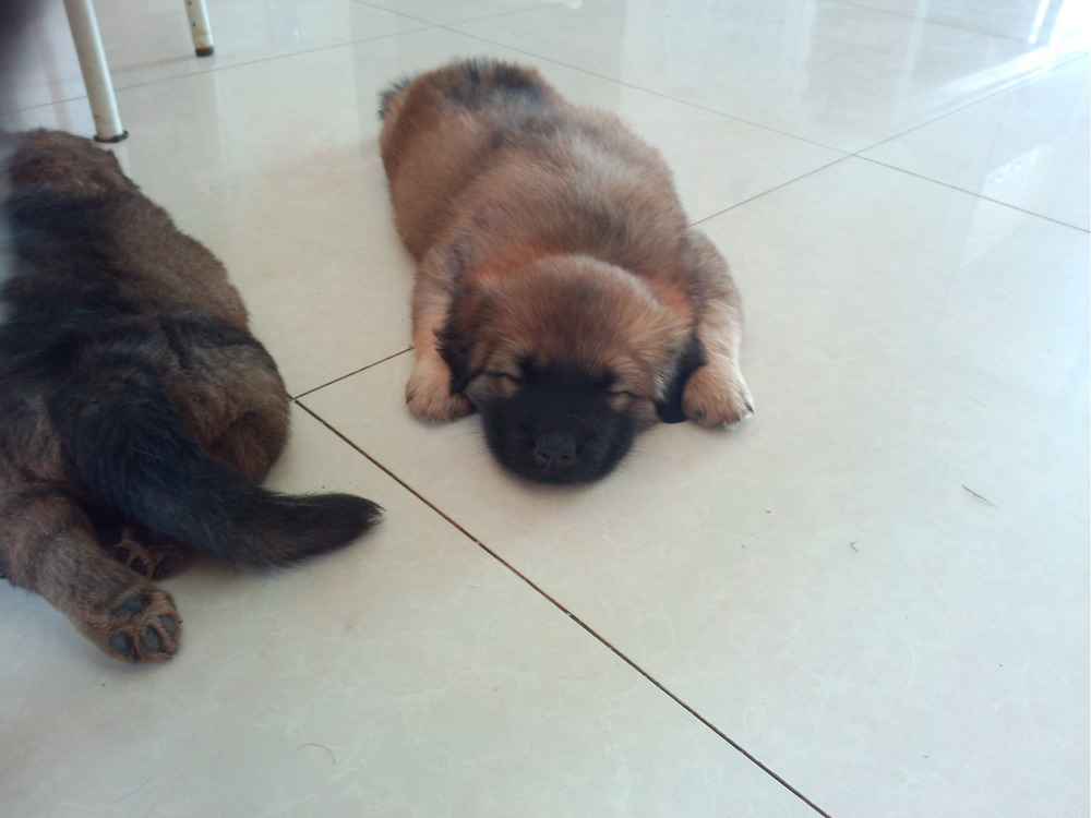 满月小狗四只,中小型犬,免费赠送. 求领养